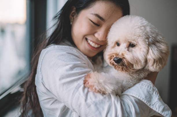 an asian chinese female young adult hugging her pet toy poodle in the living room with eye closed stock photo
