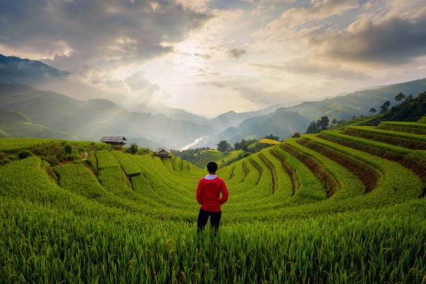 an asian man watching at paddy rice terraces, agricultural fields in countryside of mu cang chai, yen bai, mountain hills valley on summer in travel trip and holidays vacation concept, vietnam. - sa pa zdjęcia i obrazy z banku zdjęć