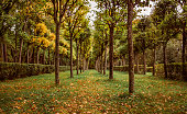 an autumn park with regularly planted trees