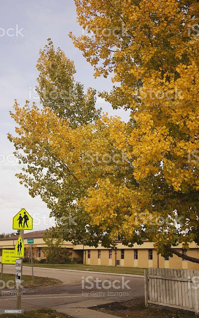 Un árbol de otoño en un edificio de escuela foto de stock libre de derechos