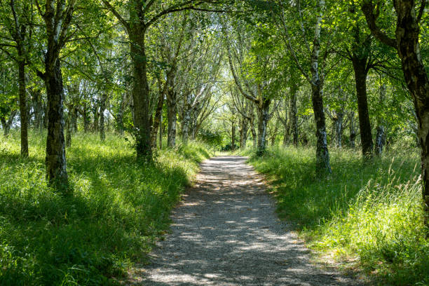An avenue in the forest leading to the mountain peak stock photo