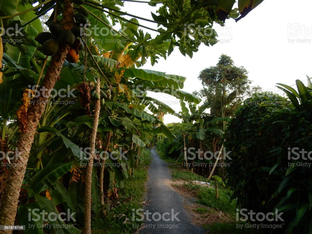 An Binh island, Mekong Delta, Vietnam royalty-free stock photo