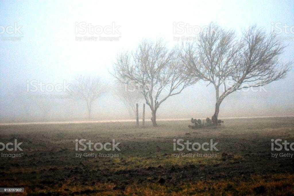 An eerie foggy morning in Texas stock photo