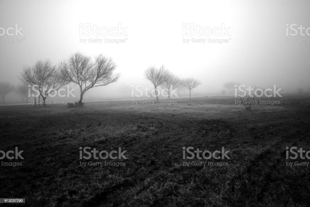 An eerie foggy morning in Texas with the dark silhouettes of mesquite trees. stock photo