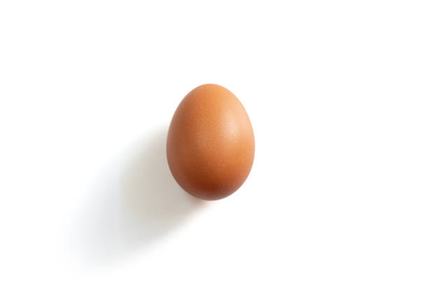 An egg on the white background Photo of an egg on the white background animal egg stock pictures, royalty-free photos & images