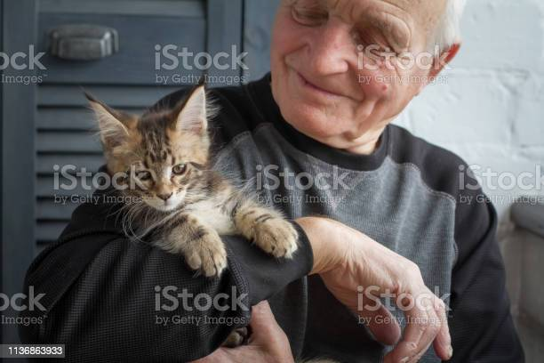 An elderly man holds a maine coon kitten and smiles to him selective picture id1136863933?b=1&k=6&m=1136863933&s=612x612&h=j2ay3ywsdp n3ou8bwo550hdqcu0f  fgosmyto8nwu=