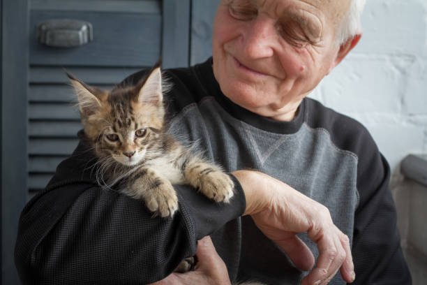An elderly man holds a maine coon kitten and smiles to him selective picture id1136863933?b=1&k=6&m=1136863933&s=612x612&w=0&h=pk6 fq6d7n0vl37oqoz26ulqexcszjsc7boc8z3ceqq=