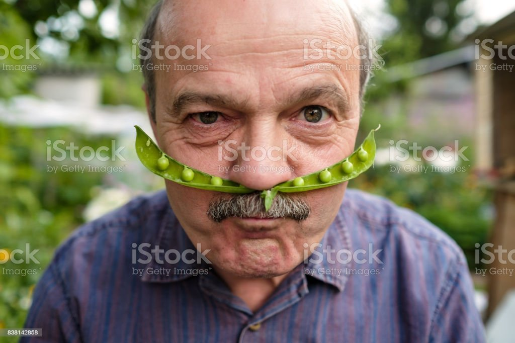 An elderly man is fooling around. He holds a pea pod near his face like a mustache stock photo