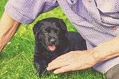 An elderly man with the little black puppy of labrador retriever outdoors. The man sitting on the grass and petting the dog
