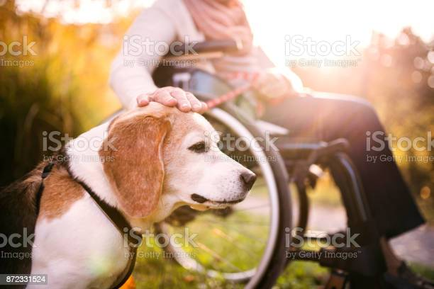 An elderly woman in wheelchair with dog in autumn nature picture id872331524?b=1&k=6&m=872331524&s=612x612&h=clxfxbpku7ofsyvegzdynnxqvjwnrlc6z xifwsle7u=