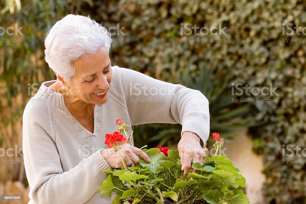 An elderly woman pruning her plant  royalty-free stock photo