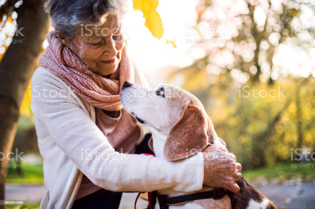 An elderly woman with dog in autumn nature. stock photo