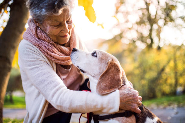 an elderly woman with dog in autumn nature. - stroking stock pictures, royalty-free photos & images