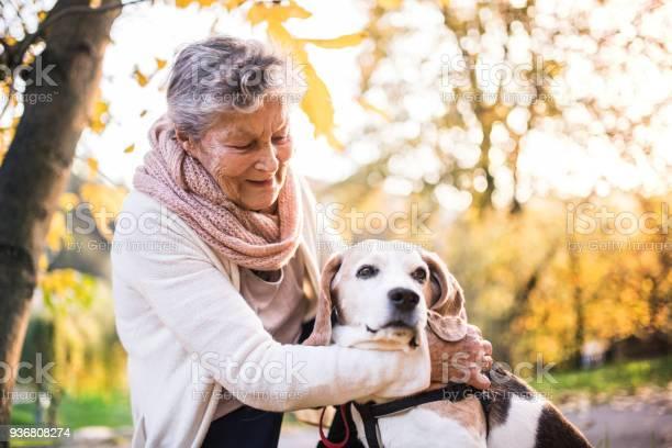 An elderly woman with dog on a walk in autumn nature picture id936808274?b=1&k=6&m=936808274&s=612x612&h=slvkuna0vta6zqhru9nais7djyuwkoee9j sq1gjkmk=