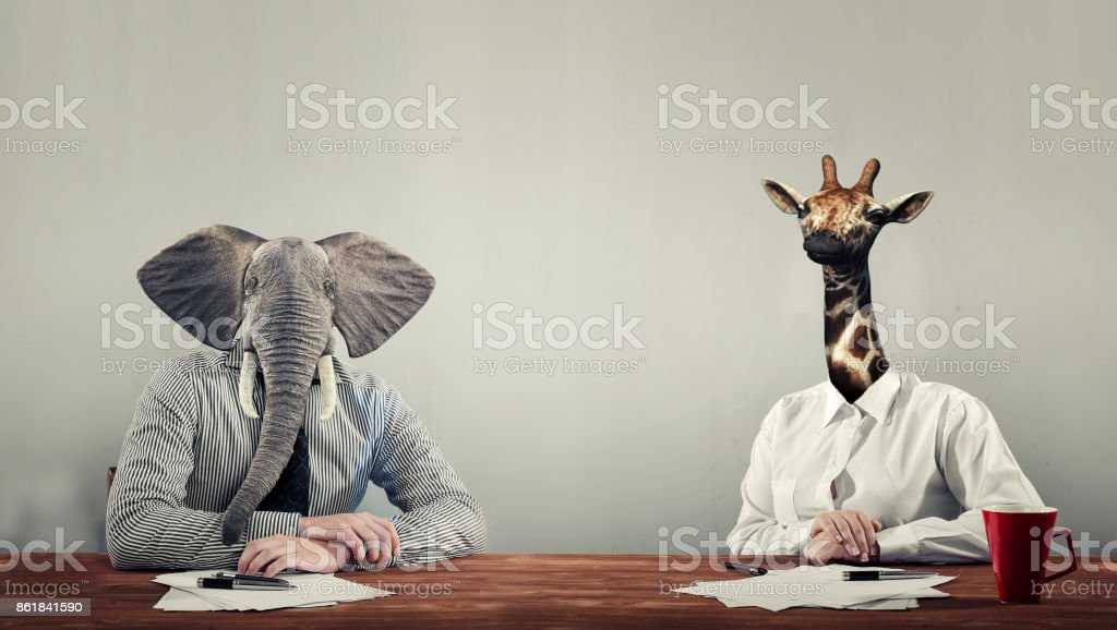 An elephant and a giraffe dressed stock photo