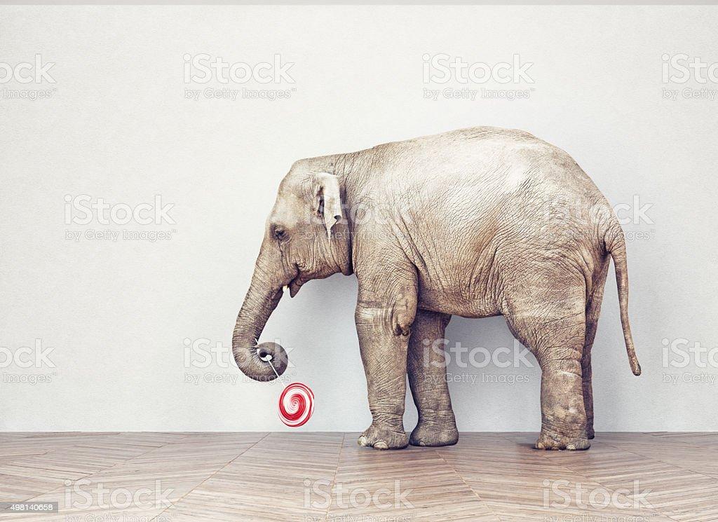 an elephant calm stock photo