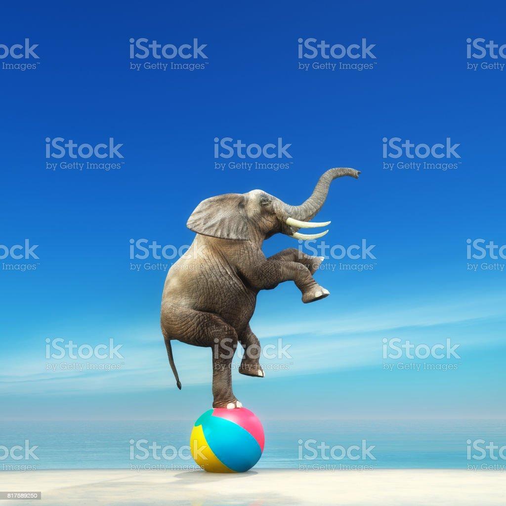 Un éléphant sur un ballon de plage - Photo