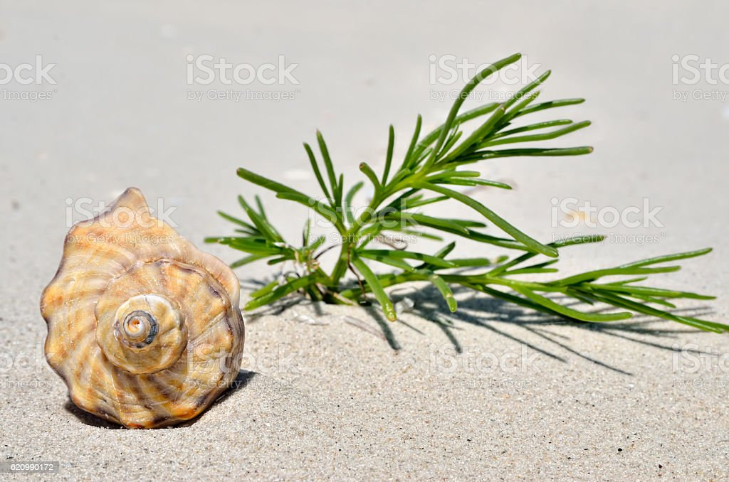 An empty shell lying on the sand in the desert. foto royalty-free