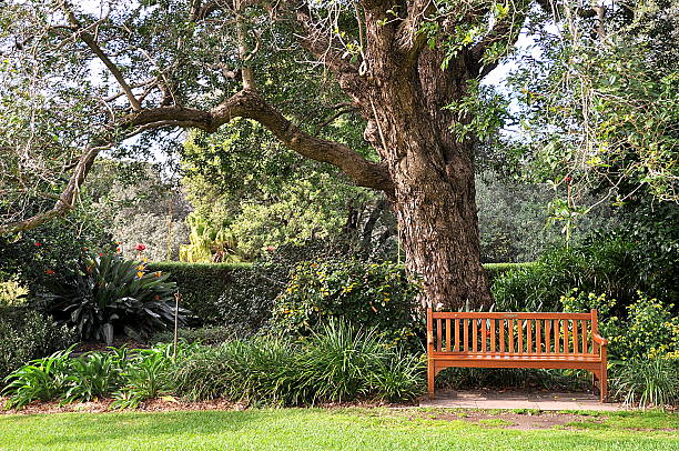 An empty  wooden park bench stock photo
