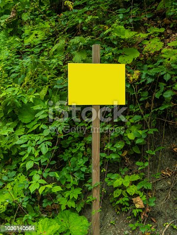 1144228509 istock photo an empty yellow plate on the background of the forest 1036140564