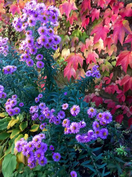 An english cottage garden picture id1133986048?b=1&k=6&m=1133986048&s=612x612&w=0&h=c9k0i3dh ox3xce8jqumd 8gajnqxti58hgmmaro57y=