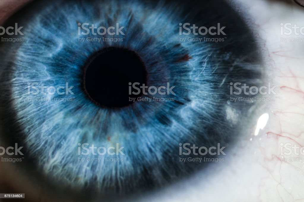 An Enlarged Image Of Eye With A Blue Iris Eyelashes And Sclera Stock ...