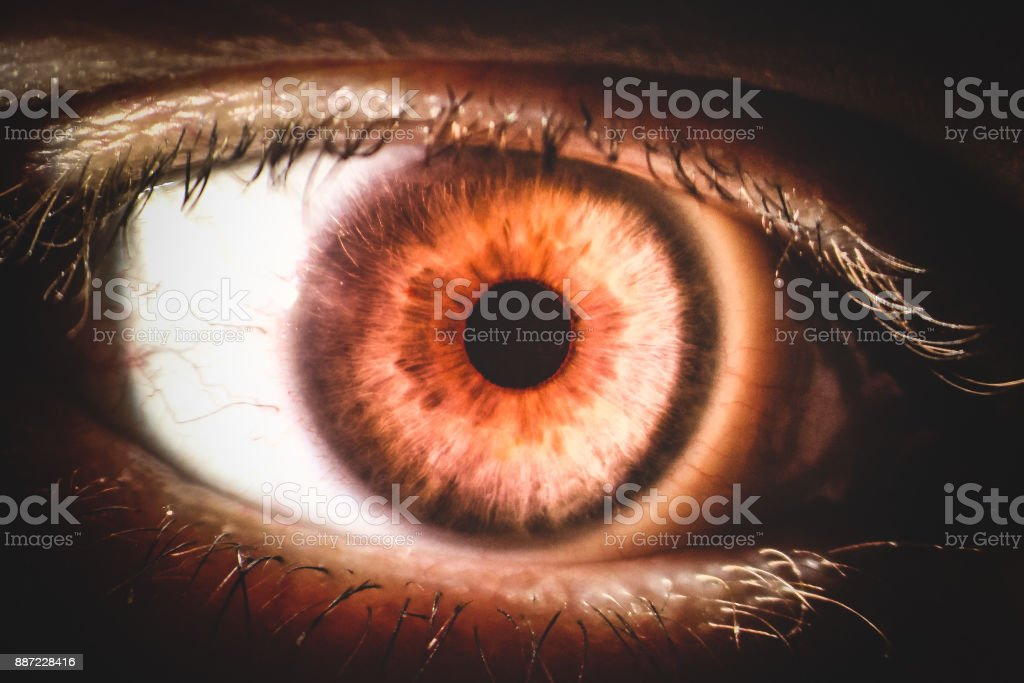 An Enlarged Image Of Eye With A Brown Iris Eyelashes And Sclera The