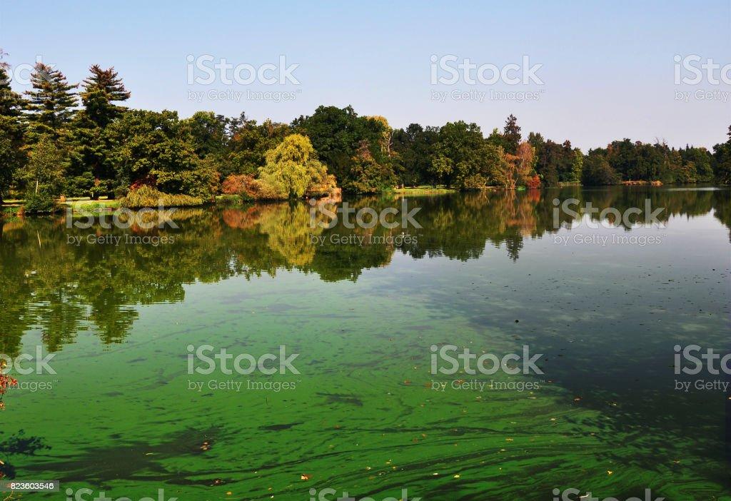 Een Europese vijver gedekt alot van cyanobacteriën foto
