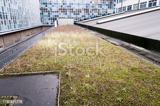 On a large building in the city, plants have been planted on the roof with a drain pipe next to it