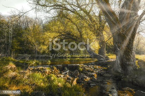 An idyllic sunset at a small lake in the nature in the forest