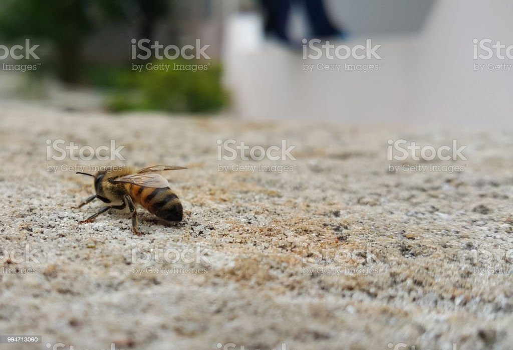 An Illustration of a bee sitting on a rock stock photo