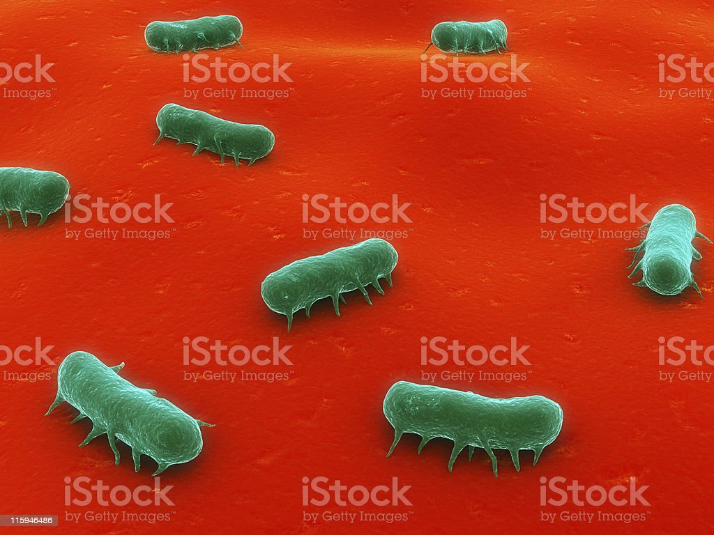 An illustration of a salmonella bacteria royalty-free stock photo