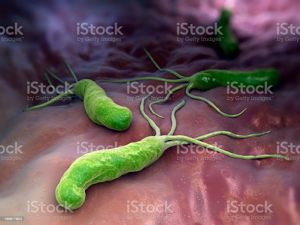 An illustration of helicobacter pylori royalty-free stock photo