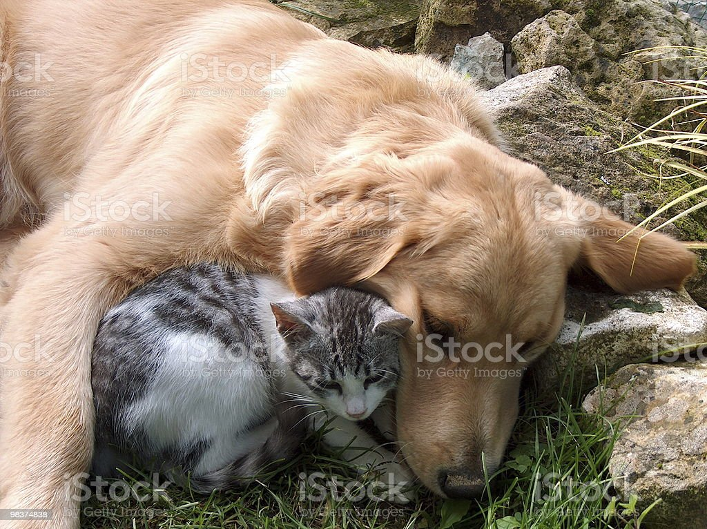 An image of a cat and dog best friends royalty-free stock photo