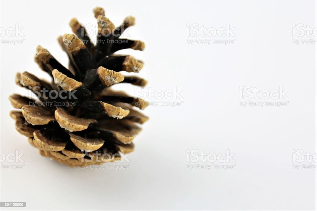 An Image of a cone pine - nature royalty-free stock photo