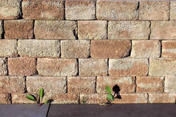 ein bild von einer steinmauer im garten - steine für gartenmauer stock-fotos und bilder