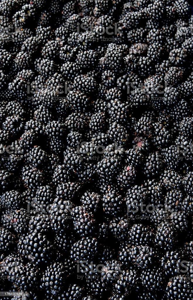 An image of fresh blackberries royalty-free stock photo