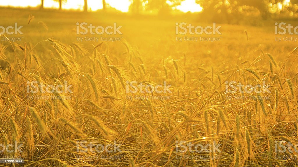 An image of plant royalty-free stock photo