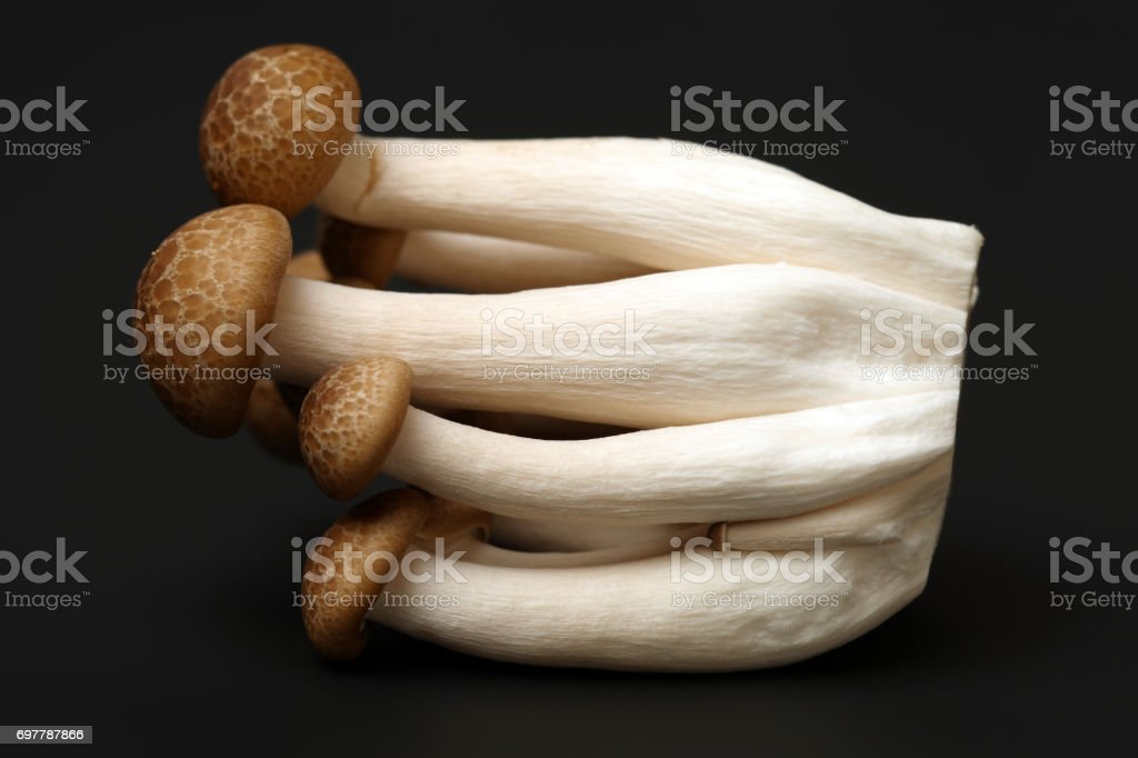 An image showing some oriental willow mushrooms, or brown tea tree mushrooms. Popularly used in chinese stock photo