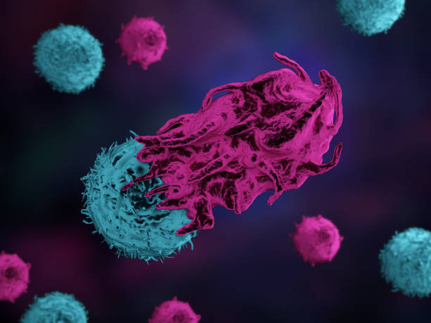 An immune T cell attacking a cancer cell stock photo