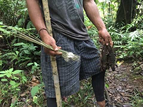 An indigenous person coming back from a succesfull lizard hunt with the blow pipe or cervatana
