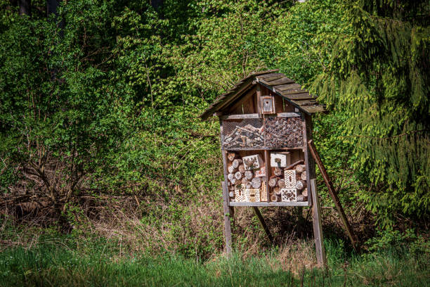 An insect hotel on a forest clearing. Should provide insects with a shelter stock photo