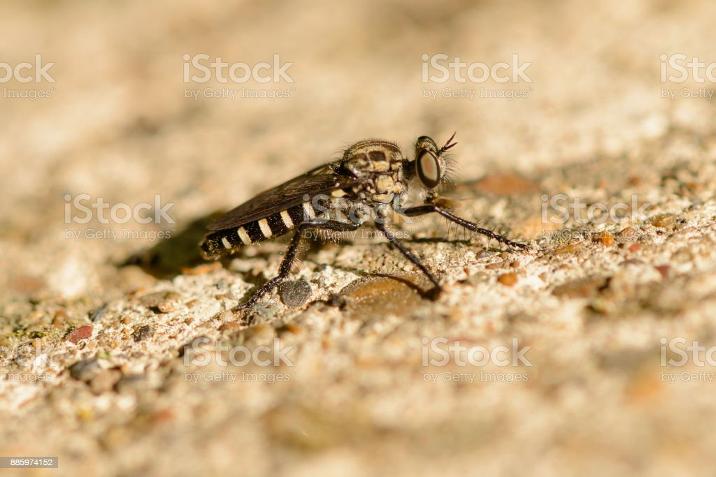 an insect like a fly sits on the rocks stock photo