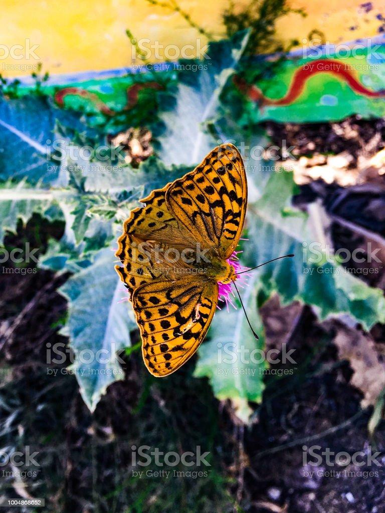 7605cbae7 Photo libre de droit de Un Insecte Sur Une Fleur Un Fragment De La ...