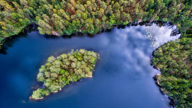 en ö - pine forest sweden bildbanksfoton och bilder