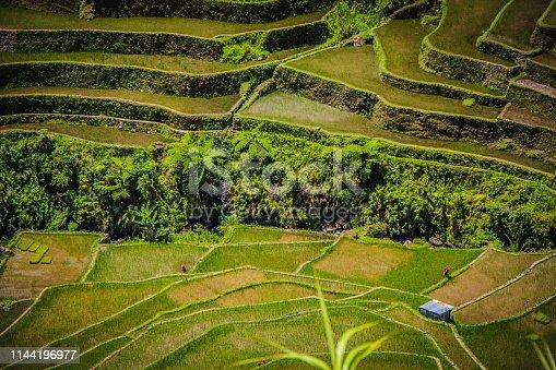 607590542istockphoto An isolated farm house on the Batad rice terraces 1144196977