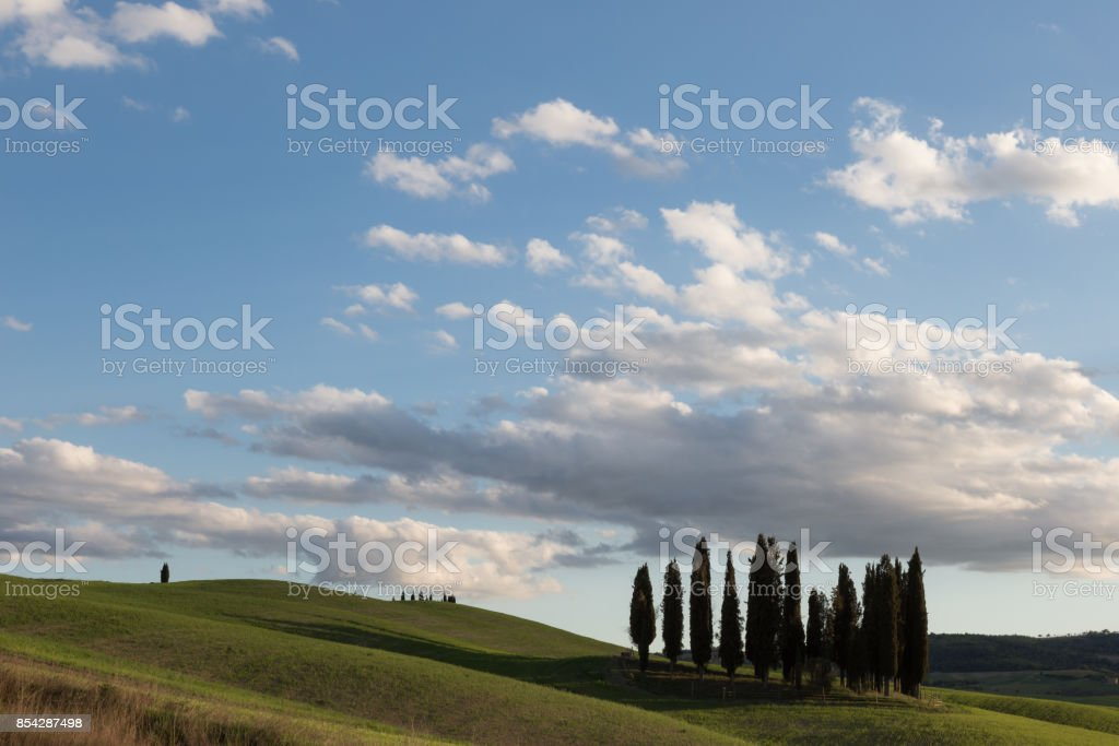 An isolated group of cypresses on a green hill in Tuscany (Italy), under a big blue sky with white clouds. Typical Tuscany landscape. stock photo