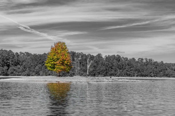 An isolated tree on an isolated island in the middle of a lake. stock photo