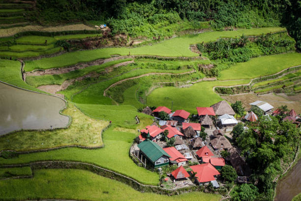 an isolated village on the batad rice terraces - baguio city stock photos and pictures
