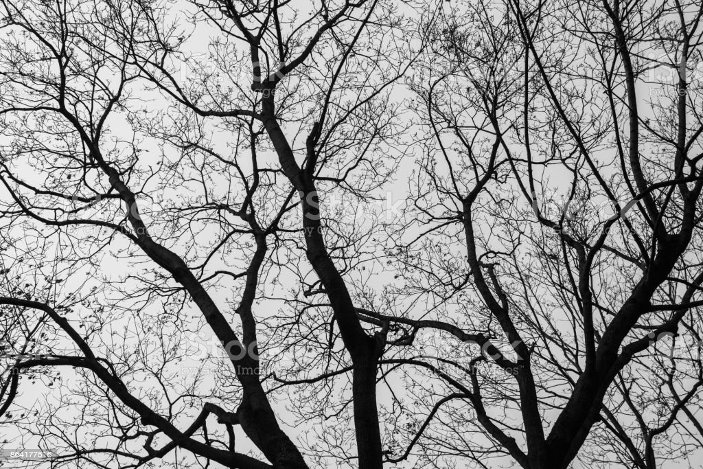An oak black and white tonned background royalty-free stock photo